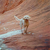 white dog on red stone